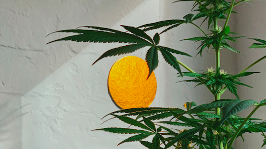 CBD BEAUTY: THE REVOLUTIONARY INGREDIENT